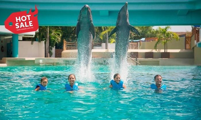 Hot Sale 2017 Groupon: nado con delfines Delphinus CANCUN (precio con cupón)