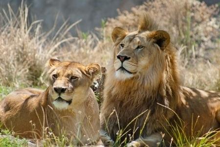 Groupon: Entrada a Africam Safari al 50% (Solo durante 3 horas!)