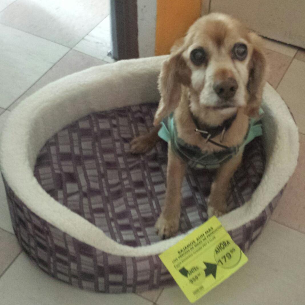 Comercial Mexicana: Cama grande para perro de $360 a $179