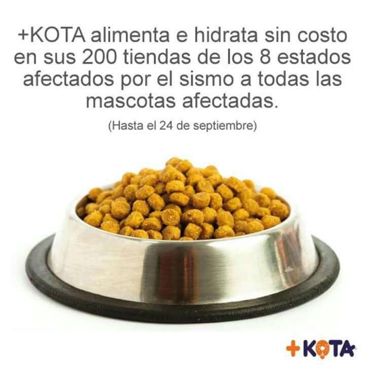 +kota: alimenta e hidrata sin costo a tu mascota en sucursales de las zonas afectadas