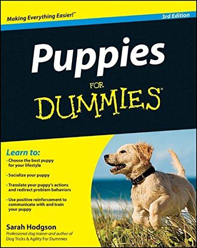"""Amazon: Libros en inglés para tontines (""""For dummies""""), en oferta. (Biblia, matemáticas, física y perros.)"""