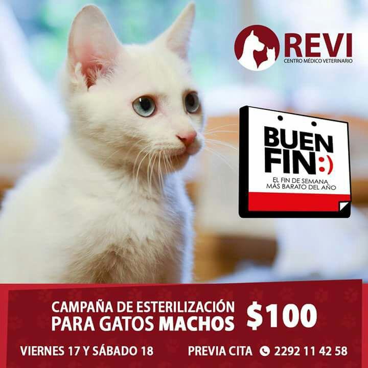 Veracruz Esterilización para gato $100