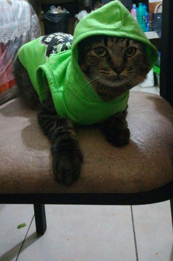 Walmart: ropa de halloween de mascotas a $5.01