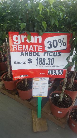 Home Depot: arbol ficus con 30% de descuento