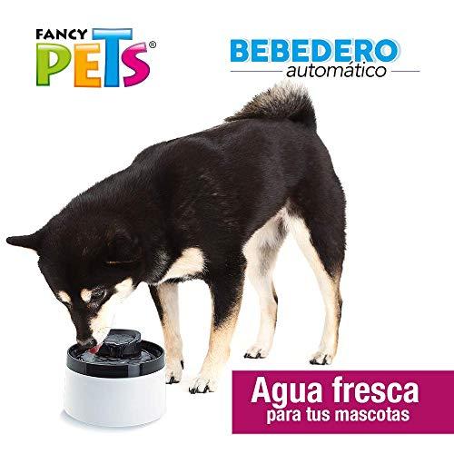 Amazon: Fuente de agua para mascotas