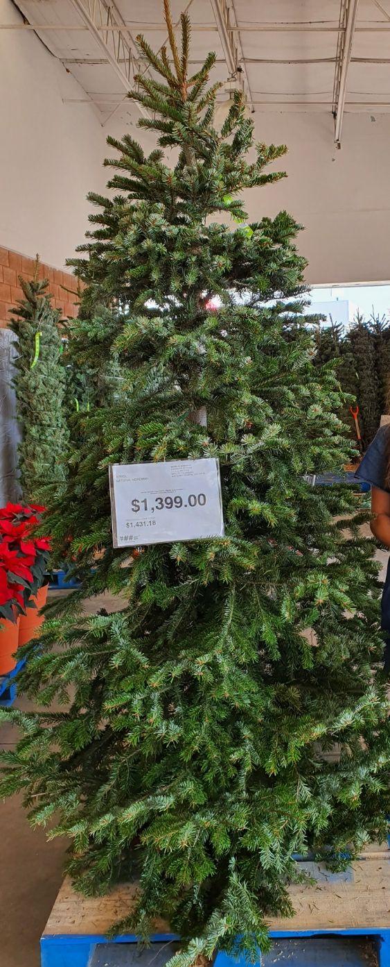 City Club Querétaro: Árbol natural de navidad de 2.4m