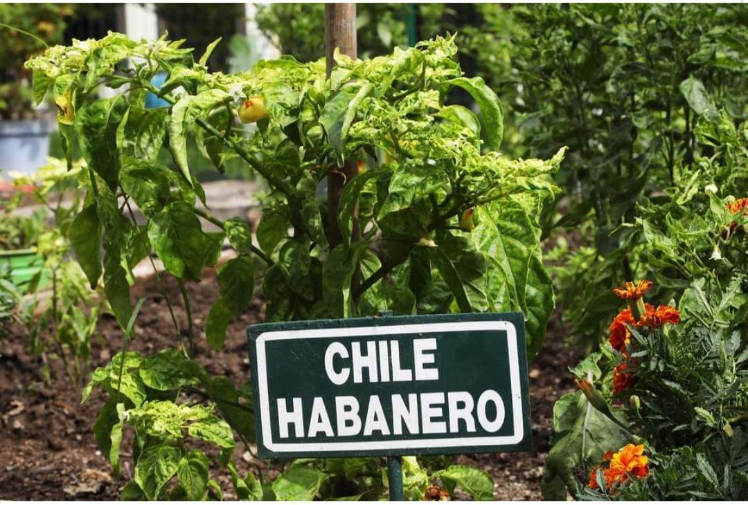 Gobierno de San Nicolás de los Garza: Recicla a cambio de paquetes para crear huertos en casa