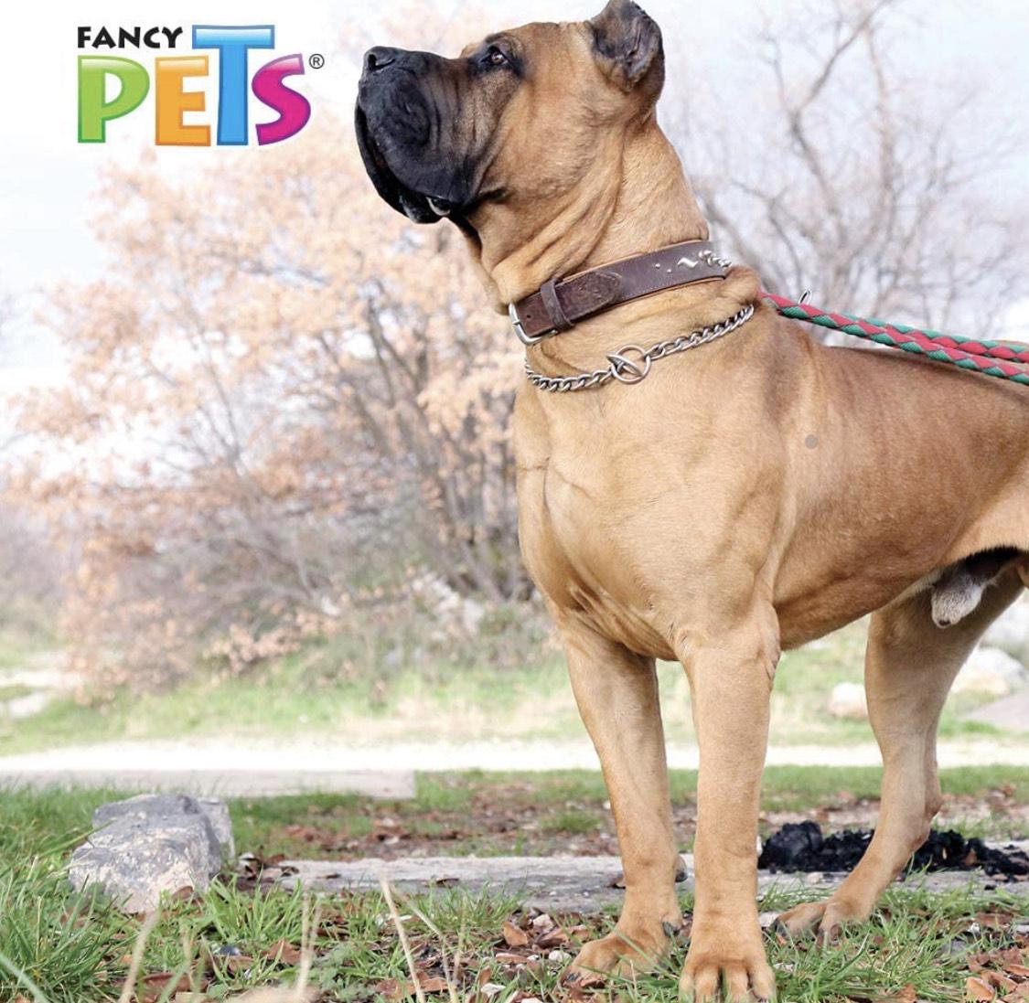 Amazon: Collar de entrenamiento para perros grandes