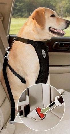 Amazon: Cinturón de Seguridad de Coche para Perros