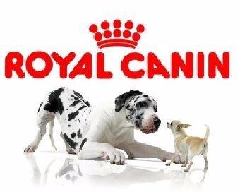 Amazon Mexico Alimento Royal canin 50% de descuento
