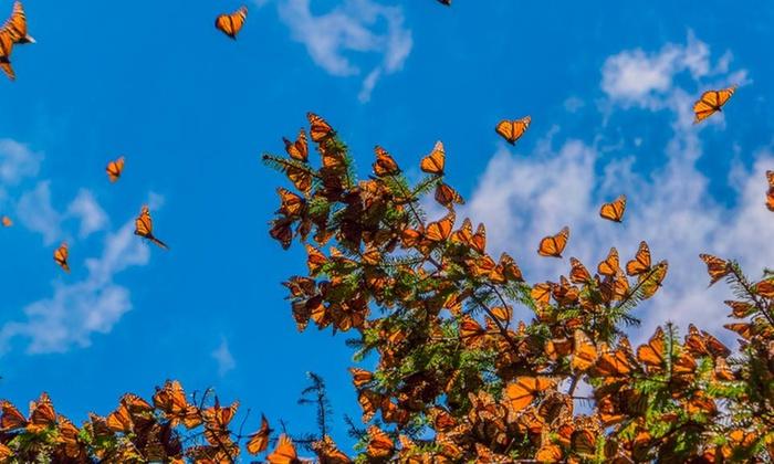 Groupon: Tour de Mariposa Monarca